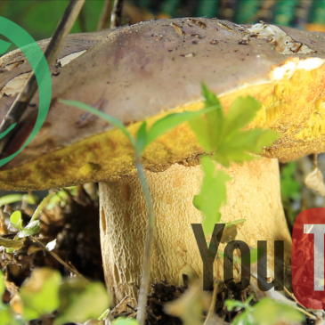Full Length Episode: Spring Mushrooms