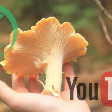Full Length Episode: Chanterelles